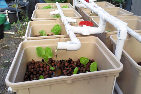 Aquaponics growing trend to 39 grow your own 39 for Arizona aquaponics